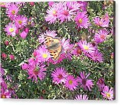 Butterfly And Pink Flowers Acrylic Print