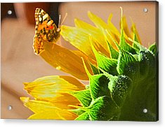 Butterfly And Sunflower Meeting Acrylic Print