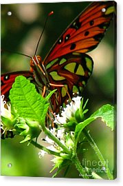 Butterfly Art Acrylic Print by Greg Patzer