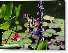 Butterfly At Lunch Acrylic Print by Marilyn Carlyle Greiner