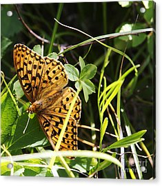 Butterfly At Signal Mountain Acrylic Print by Belinda Greb