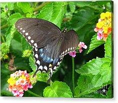 Butterfly Ballot Acrylic Print