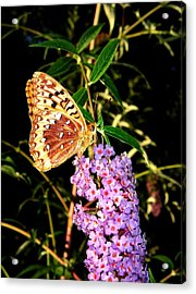 Butterfly Banquet 2 Acrylic Print by Will Borden