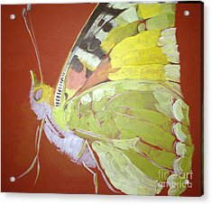 Butterfly Basic In Work Acrylic Print