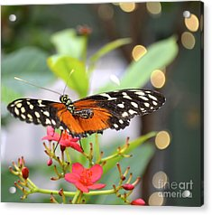Acrylic Print featuring the photograph Butterfly Beauty by Carla Carson