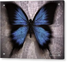 Butterfly Becomes The Mosaic  Acrylic Print