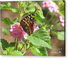 Butterfly Bloom Acrylic Print by Gayle Melges