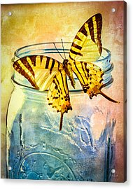 Butterfly Blue Glass Jar Acrylic Print by Bob Orsillo