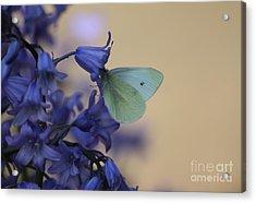 Butterfly Bounty Acrylic Print
