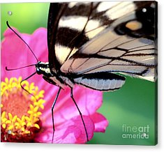 Butterfly Brunch Acrylic Print