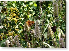 Acrylic Print featuring the photograph Butterfly Buffet by Meghan at FireBonnet Art