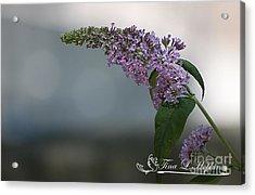 Butterfly Bush 20120706_165a Acrylic Print