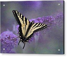 Butterfly Bush Acrylic Print by Angie Vogel