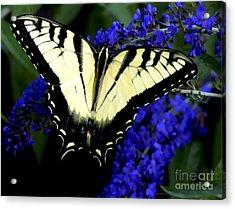 Butterfly Bush Acrylic Print