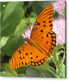 Butterfly Butterfly 2  Acrylic Print