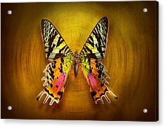 Butterfly - Butterfly Of Happiness  Acrylic Print by Mike Savad