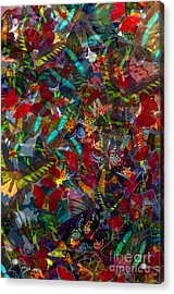Acrylic Print featuring the photograph Butterfly Collage Red by Robert Meanor