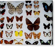 Butterfly Collection Acrylic Print by Brigitte Emme