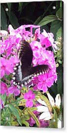 Butterfly Acrylic Print by Cynthia Harvey