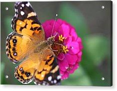 Butterfly Dance Acrylic Print