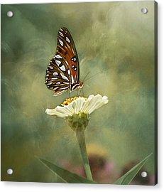 Butterfly Dreams Acrylic Print by Kim Hojnacki