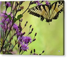 Acrylic Print featuring the photograph Butterfly by Eric Switzer