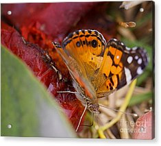 Acrylic Print featuring the photograph Butterfly by Erika Weber