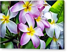 Acrylic Print featuring the photograph Butterfly Flowers by Thomas Woolworth