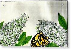 Butterfly Acrylic Print by Francine Heykoop