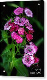 Acrylic Print featuring the digital art Butterfly Garden 02 - Carnations by E B Schmidt