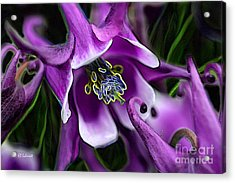 Acrylic Print featuring the digital art Butterfly Garden 04 - Columbine by E B Schmidt