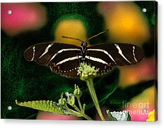 Acrylic Print featuring the digital art Butterfly Garden 06 - Zebra Heliconian by E B Schmidt