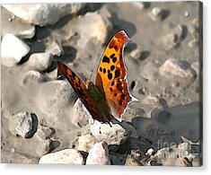 Acrylic Print featuring the digital art Butterfly Garden 09 - Eastern Comma by E B Schmidt