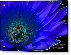 Acrylic Print featuring the digital art Butterfly Garden 11 - Water Lily by E B Schmidt