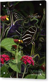 Acrylic Print featuring the digital art Butterfly Garden 19 - Zebra Heliconian by E B Schmidt