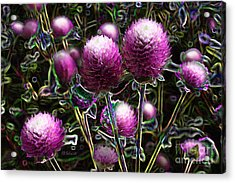 Acrylic Print featuring the digital art Butterfly Garden 20 - Globe Amaranth by E B Schmidt