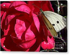 Acrylic Print featuring the digital art Butterfly Garden 21 - Cabbage White by E B Schmidt