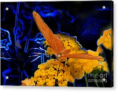 Acrylic Print featuring the digital art Butterfly Garden 22 - Julia Heliconian by E B Schmidt