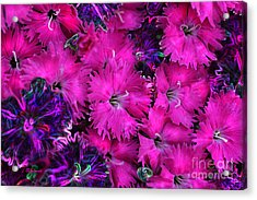 Acrylic Print featuring the digital art Butterfly Garden 23 - Carnations by E B Schmidt