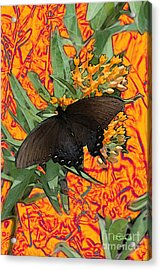 Acrylic Print featuring the digital art Butterfly Garden 25 - Spicebush Swallowtail by E B Schmidt