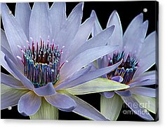 Acrylic Print featuring the digital art Butterfly Garden 26 - Water Lilies by E B Schmidt