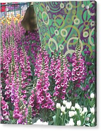 Acrylic Print featuring the photograph Butterfly Garden Purple White Flowers Painted Wall by Navin Joshi