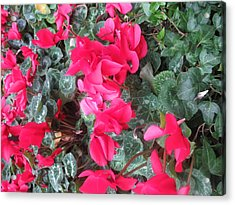 Acrylic Print featuring the photograph Butterfly Garden Red Exotic Flowers Las Vegas by Navin Joshi