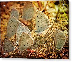 Acrylic Print featuring the photograph Butterfly Gathering by Peggy Collins