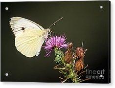 Butterfly Acrylic Print by George Atsametakis