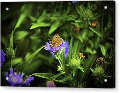 Butterfly Glow Acrylic Print