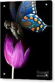Butterfly-gorilla Acrylic Print by Soumya Bouchachi