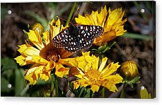 Acrylic Print featuring the photograph Butterfly Heaven by Julia Hassett