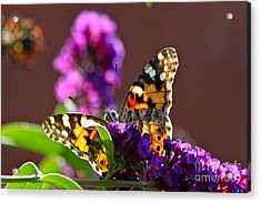 Acrylic Print featuring the photograph Butterfly Hiding by Jay Nodianos