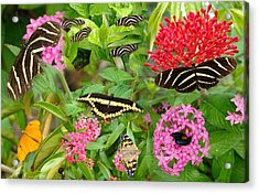 Butterfly High Acrylic Print
